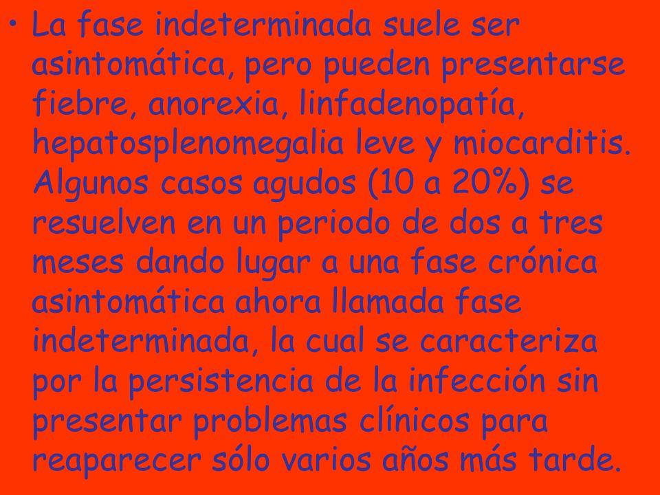 La fase indeterminada suele ser asintomática, pero pueden presentarse fiebre, anorexia, linfadenopatía, hepatosplenomegalia leve y miocarditis. Alguno