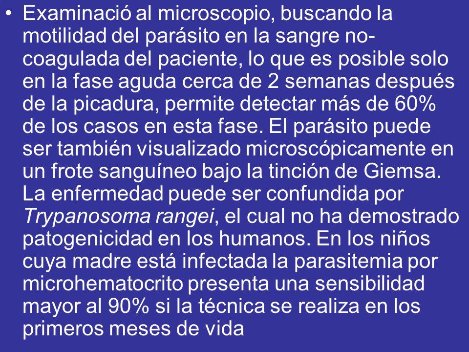 Examinació al microscopio, buscando la motilidad del parásito en la sangre no- coagulada del paciente, lo que es posible solo en la fase aguda cerca d