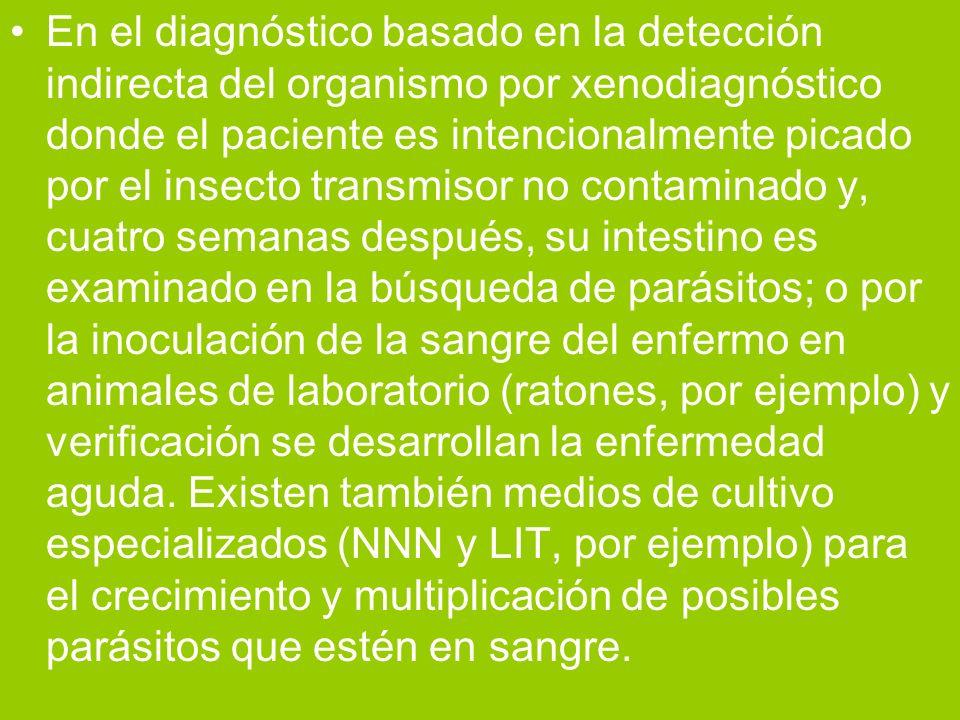 En el diagnóstico basado en la detección indirecta del organismo por xenodiagnóstico donde el paciente es intencionalmente picado por el insecto trans