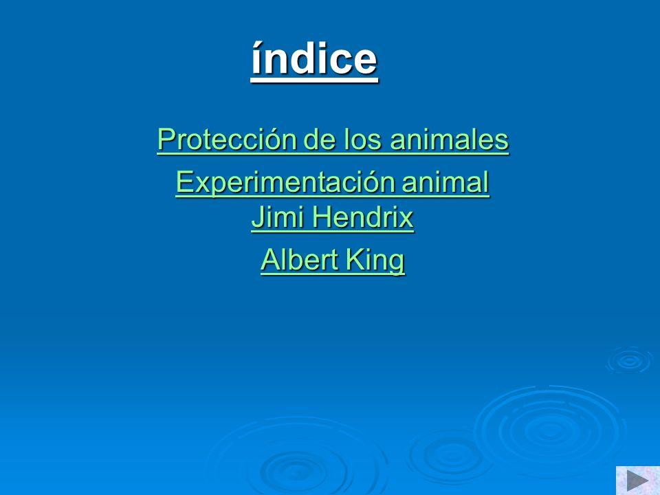 índice Protección de los animales Protección de los animales Experimentación animal Jimi Hendrix Experimentación animal Jimi Hendrix Albert King Albert King