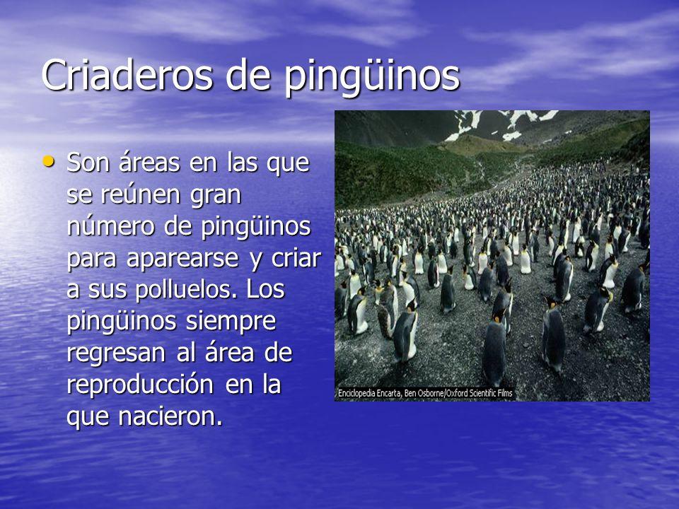 Criaderos de pingüinos Son áreas en las que se reúnen gran número de pingüinos para aparearse y criar a sus polluelos. Los pingüinos siempre regresan