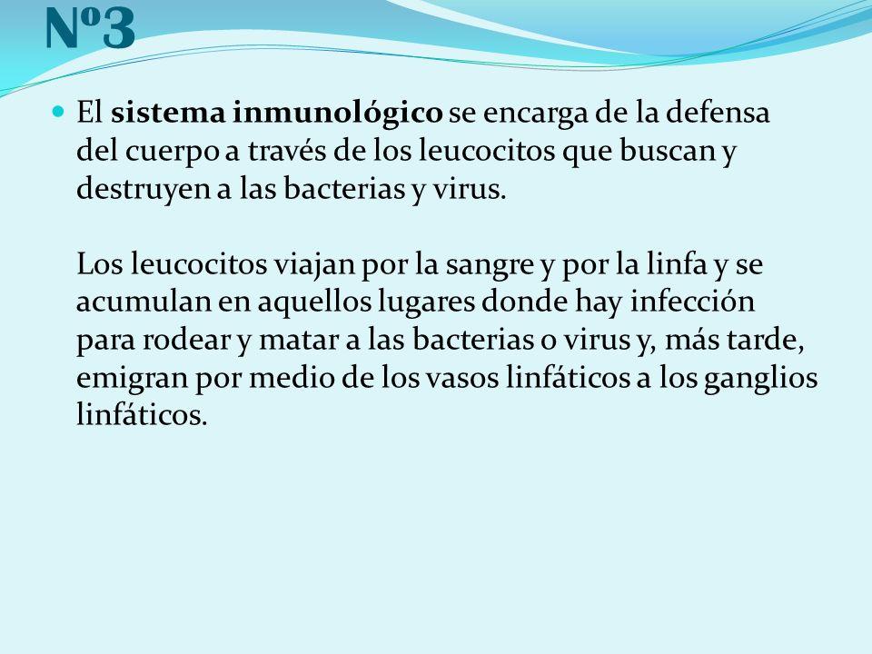 Nº3 El sistema inmunológico se encarga de la defensa del cuerpo a través de los leucocitos que buscan y destruyen a las bacterias y virus. Los leucoci