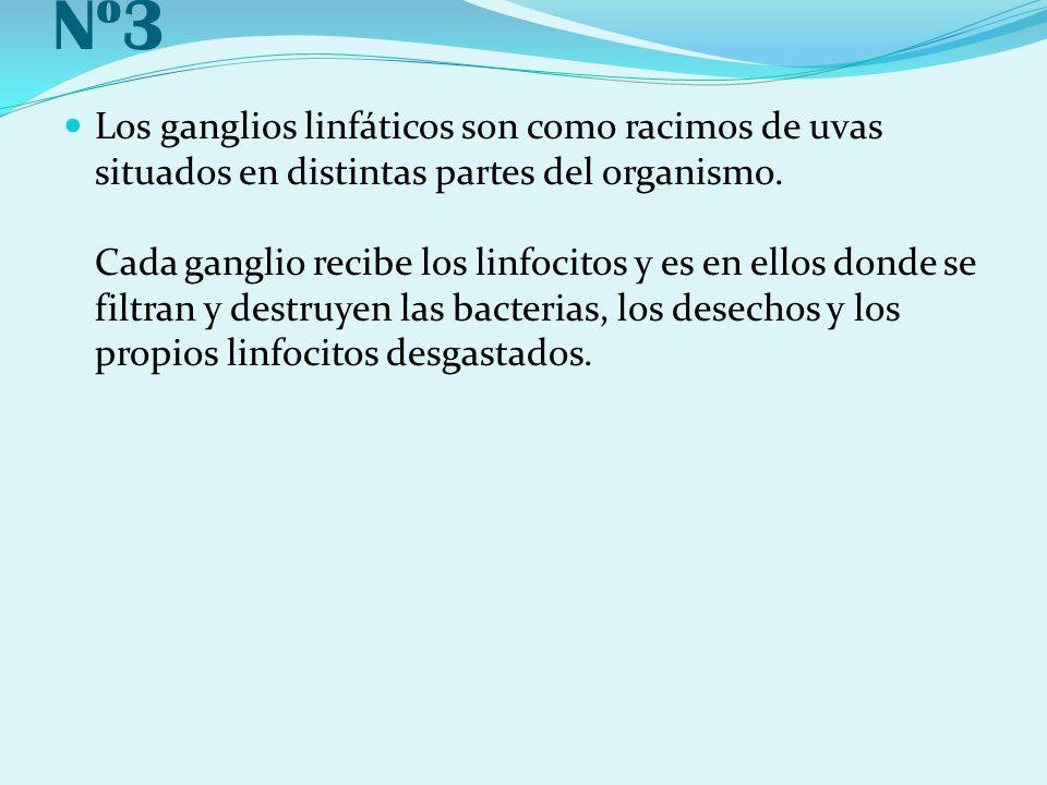 Nº3 Los ganglios linfáticos son como racimos de uvas situados en distintas partes del organismo. Cada ganglio recibe los linfocitos y es en ellos dond