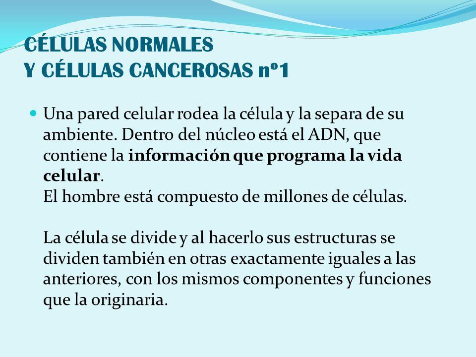 CÉLULAS NORMALES Y CÉLULAS CANCEROSAS nº1 Una pared celular rodea la célula y la separa de su ambiente. Dentro del núcleo está el ADN, que contiene la