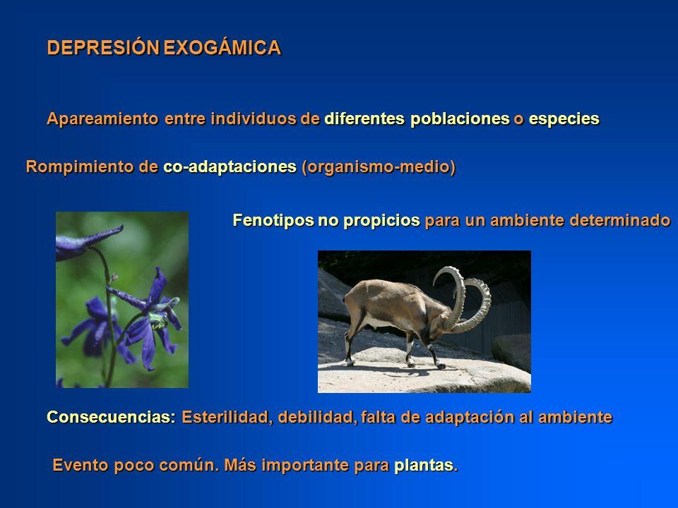 DEPRESIÓN EXOGÁMICA Apareamiento entre individuos de diferentes poblaciones o especies Rompimiento de co-adaptaciones (organismo-medio) Fenotipos no p