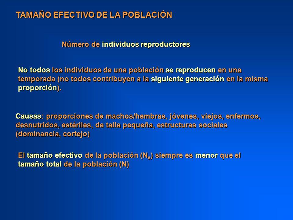 TAMAÑO EFECTIVO DE LA POBLACIÓN Número de individuos reproductores No todos los individuos de una población se reproducen en una temporada (no todos c