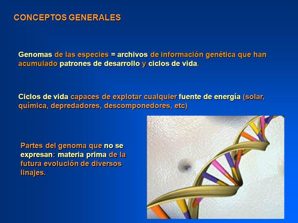 CONCEPTOS GENERALES Genomas de las especies = archivos de información genética que han acumulado patrones de desarrollo y ciclos de vida. Ciclos de vi