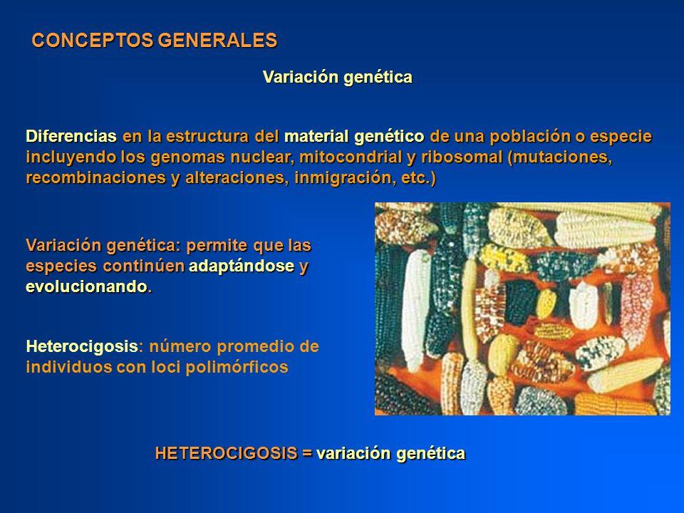 CONCEPTOS GENERALES Variación genética: permite que las especies continúen adaptándose y evolucionando. Variación genética Diferencias en la estructur