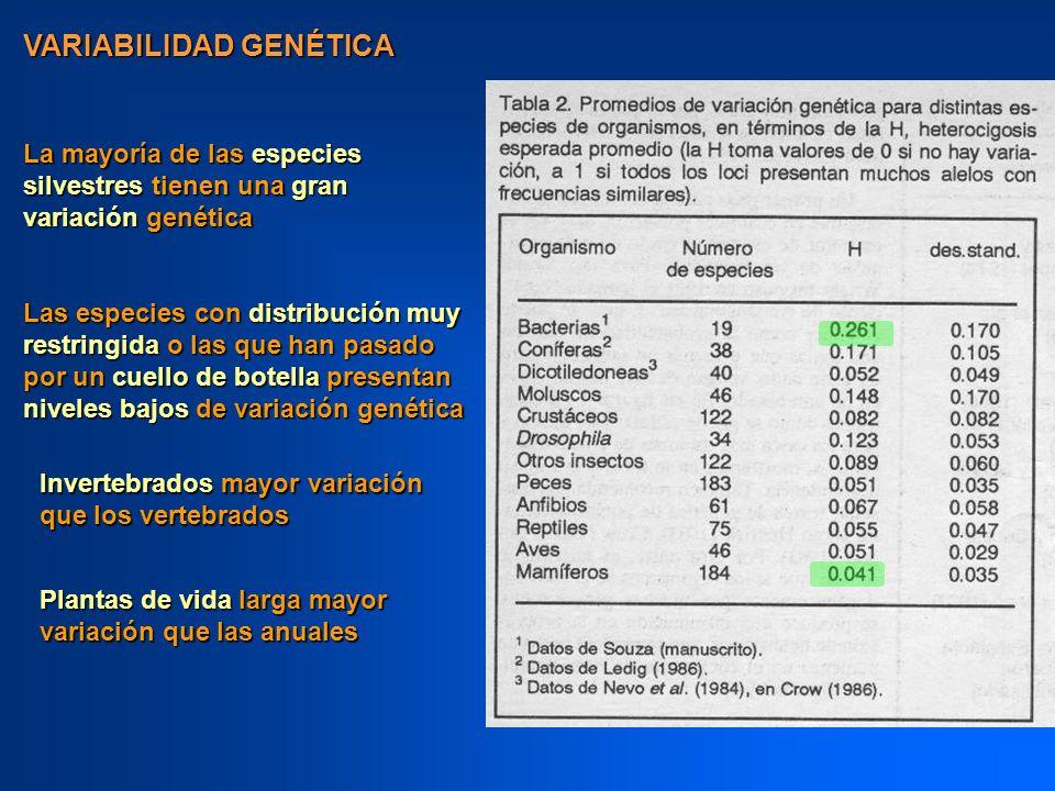 VARIABILIDAD GENÉTICA La mayoría de las especies silvestres tienen una gran variación genética Las especies con distribución muy restringida o las que
