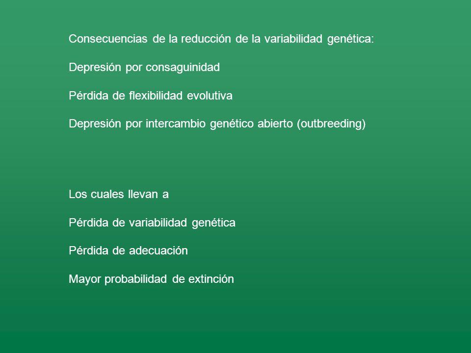 Consecuencias de la reducción de la variabilidad genética: Depresión por consaguinidad Pérdida de flexibilidad evolutiva Depresión por intercambio genético abierto (outbreeding) Los cuales llevan a Pérdida de variabilidad genética Pérdida de adecuación Mayor probabilidad de extinción