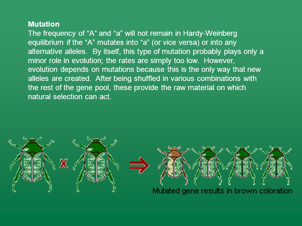 Mutation The frequency of A and a will not remain in Hardy-Weinberg equilibrium if the A mutates into a (or vice versa) or into any alternative allele