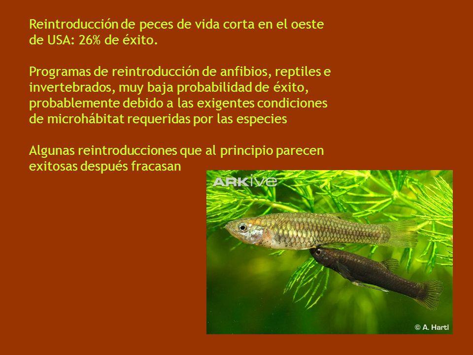 Reintroducción de peces de vida corta en el oeste de USA: 26% de éxito. Programas de reintroducción de anfibios, reptiles e invertebrados, muy baja pr