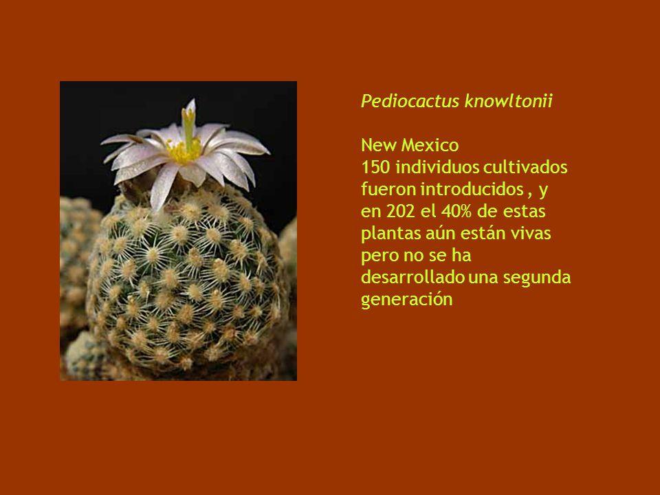 Pediocactus knowltonii New Mexico 150 individuos cultivados fueron introducidos, y en 202 el 40% de estas plantas aún están vivas pero no se ha desarrollado una segunda generación
