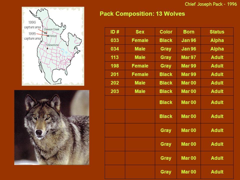 Chief Joseph Pack - 1996 Pack Composition: 13 Wolves ID #SexColorBornStatus 033FemaleBlackJan 96Alpha 034MaleGrayJan 96Alpha 113MaleGrayMar 97Adult 198FemaleGrayMar 99Adult 201FemaleBlackMar 99Adult 202MaleBlackMar 00Adult 203MaleBlackMar 00Adult BlackMar 00Adult BlackMar 00Adult GrayMar 00Adult GrayMar 00Adult GrayMar 00Adult GrayMar 00Adult