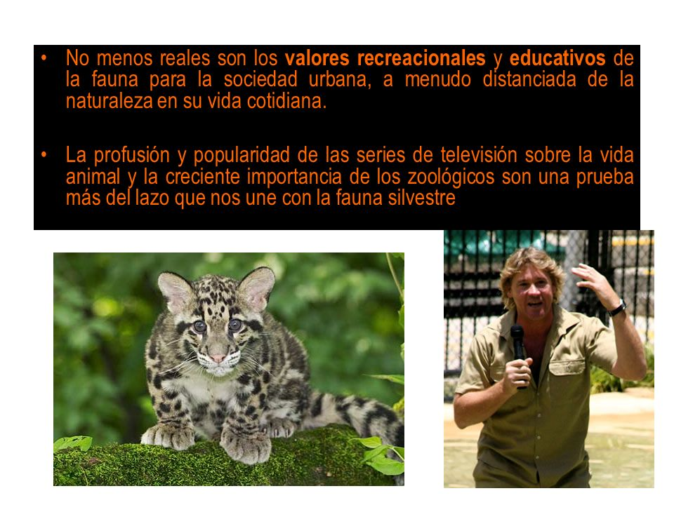 No menos reales son los valores recreacionales y educativos de la fauna para la sociedad urbana, a menudo distanciada de la naturaleza en su vida coti
