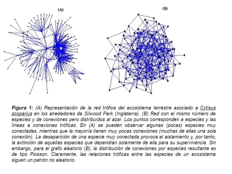 Figura 1: (A) Representación de la red trófica del ecosistema terrestre asociado a Cytisus scoparius en los alrededores de Silwood Park (Inglaterra).