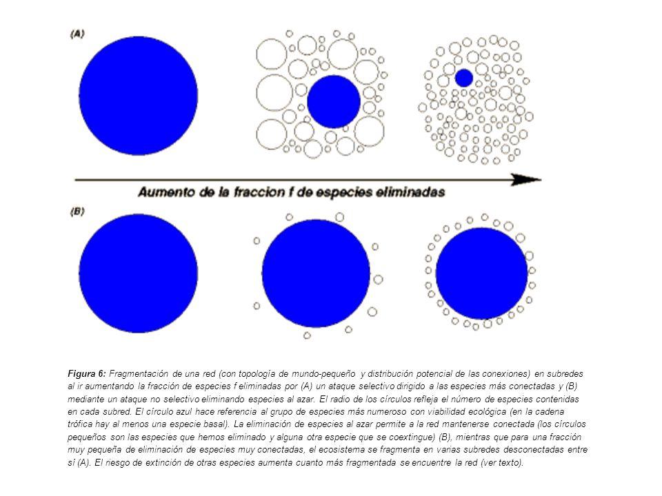 Figura 6: Fragmentación de una red (con topología de mundo-pequeño y distribución potencial de las conexiones) en subredes al ir aumentando la fracció