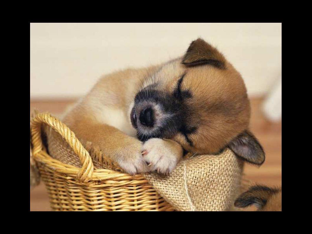 Premio mascota (perros) Con una puntuación de 83.6%
