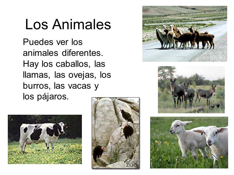 Los Animales Puedes ver los animales diferentes.