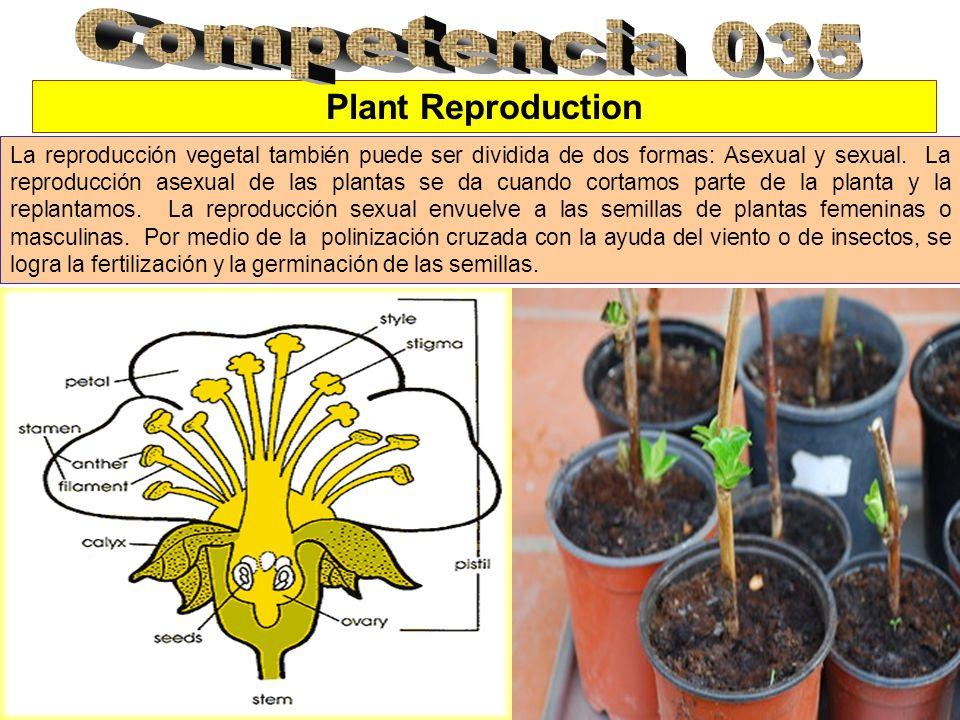 Plant Reproduction La reproducción vegetal también puede ser dividida de dos formas: Asexual y sexual. La reproducción asexual de las plantas se da cu