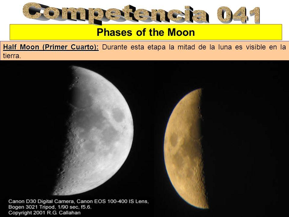Phases of the Moon Half Moon (Primer Cuarto): Half Moon (Primer Cuarto): Durante esta etapa la mitad de la luna es visible en la tierra.