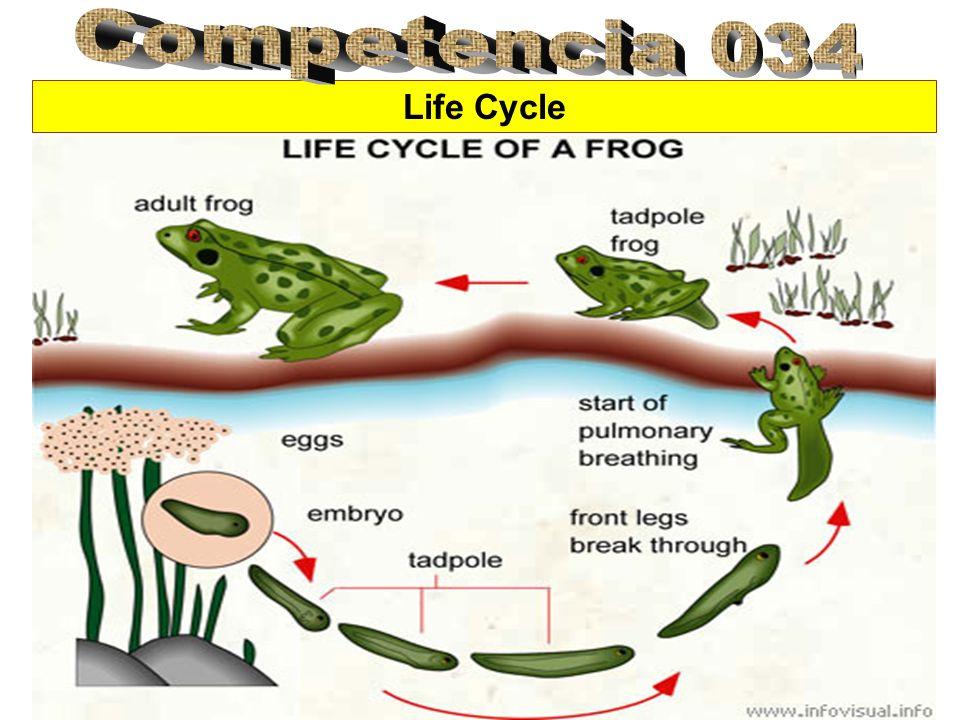 Life Cycle of Plants El ciclo de vida de las plantas generalmente empiezan con una semilla.
