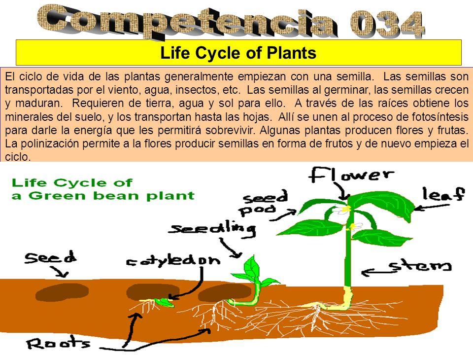 Life Cycle of Plants El ciclo de vida de las plantas generalmente empiezan con una semilla. Las semillas son transportadas por el viento, agua, insect