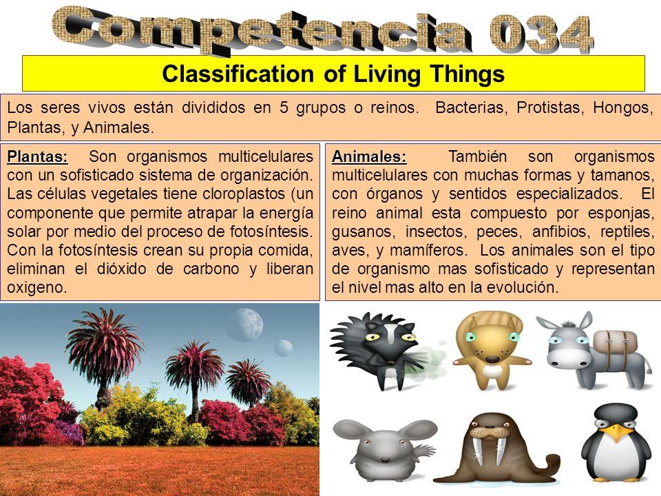 Classification of Living Things Los seres vivos están divididos en 5 grupos o reinos. Bacterias, Protistas, Hongos, Plantas, y Animales. Plantas: Plan