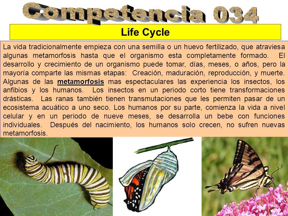 Life Cycle metamorfosis La vida tradicionalmente empieza con una semilla o un huevo fertilizado, que atraviesa algunas metamorfosis hasta que el organ