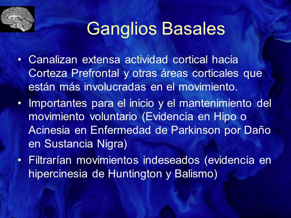 Ganglios Basales Canalizan extensa actividad cortical hacia Corteza Prefrontal y otras áreas corticales que están más involucradas en el movimiento. I