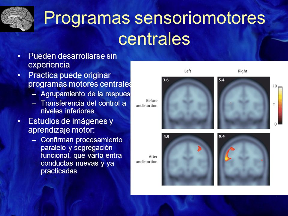 Programas sensoriomotores centrales Pueden desarrollarse sin experiencia Practica puede originar programas motores centrales: –Agrupamiento de la resp