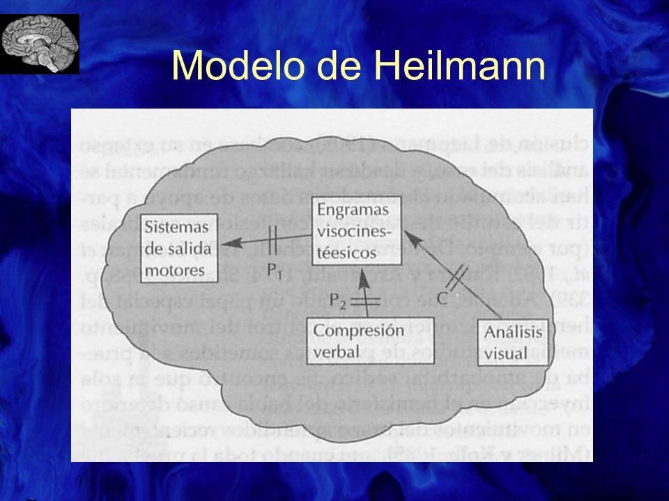 Modelo de Heilmann