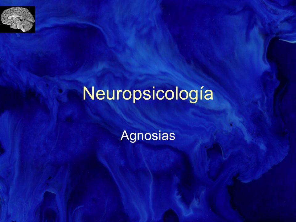 Se incluyen dentro de los trastornos de la sensación.