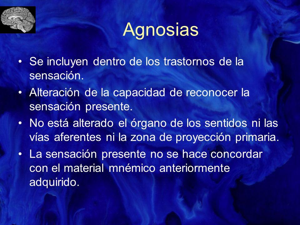 Agnosia Visual (óptica) No se reconoce el material visual: –Agnosia espacial: no se reconoce el entorno espacial, ordenación espacial de una habitación, trayecto de una calle, estructura espacial de las vestimentas, etc.