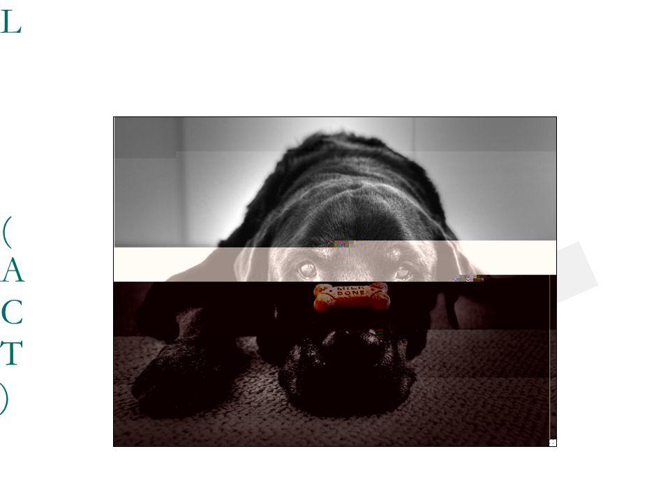 23/03/0923/03/09 - LA ENFERMEDAD CRÓNICA