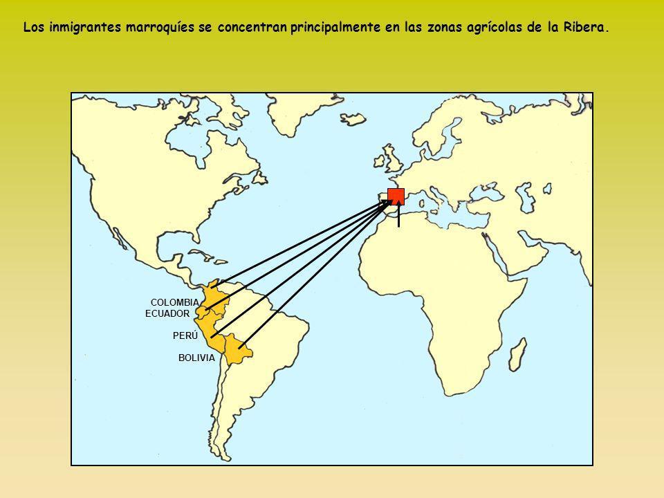 COLOMBIA ECUADOR PERÚ BOLIVIA Los inmigrantes marroquíes se concentran principalmente en las zonas agrícolas de la Ribera.