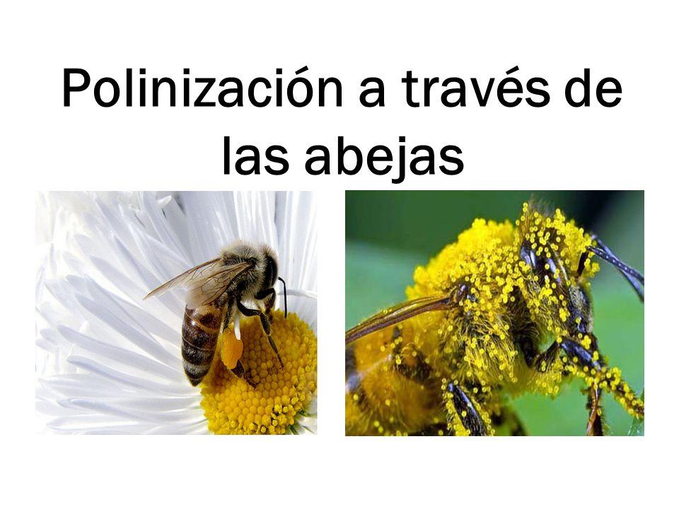 Polinización a través de las abejas