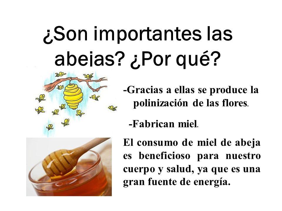 ¿Son importantes las abejas? ¿Por qué? -Gracias a ellas se produce la polinización de las flores. -Fabrican miel. El consumo de miel de abeja es benef