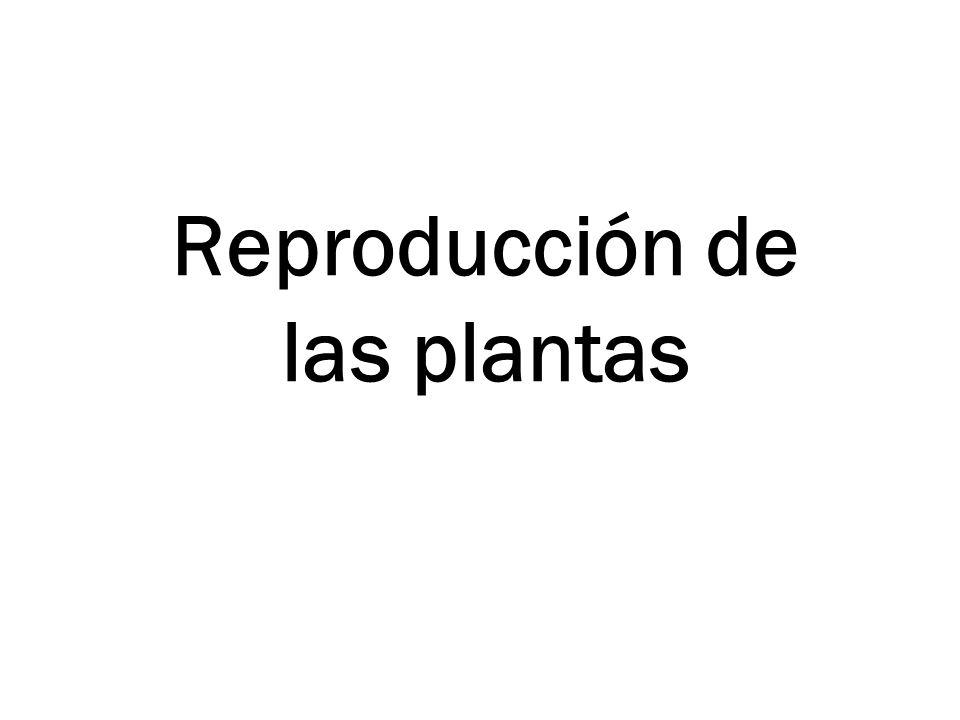 Vídeo http://www.juntadeandalucia.es/averroes/carambolo/WEB%20JC LIC2/Agrega/Medio/Las%20plantas/contenido/cm07_oa04_es/ind ex.html (punto 2)
