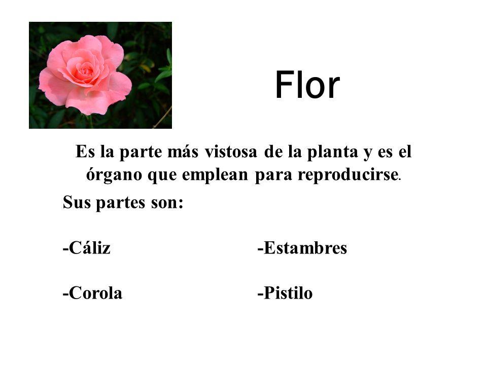 Flor Es la parte más vistosa de la planta y es el órgano que emplean para reproducirse. Sus partes son: -Cáliz-Estambres -Corola-Pistilo