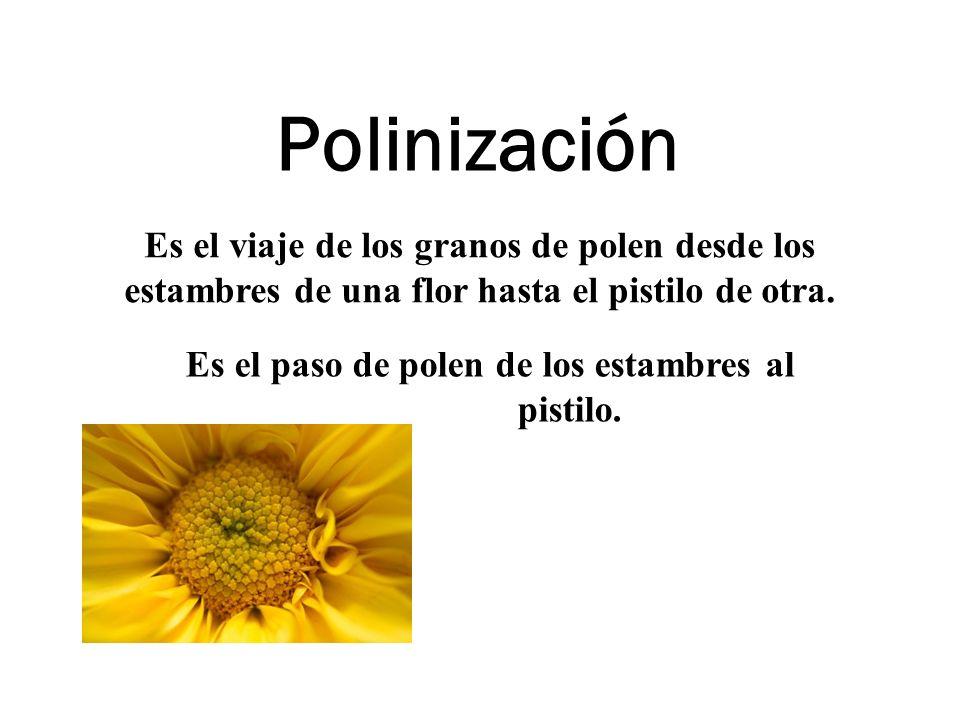 Polinización Es el viaje de los granos de polen desde los estambres de una flor hasta el pistilo de otra. Es el paso de polen de los estambres al pist