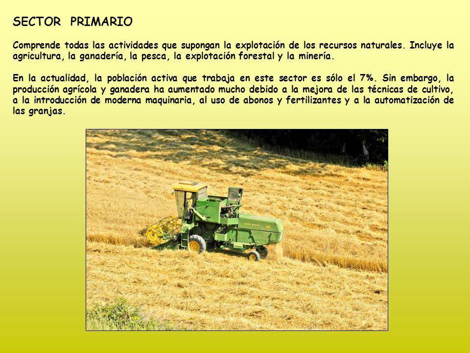 CULTIVOS DE SECANO Y REGADÍO Según la disponibilidad del agua, hay diferentes tipos de cultivos.