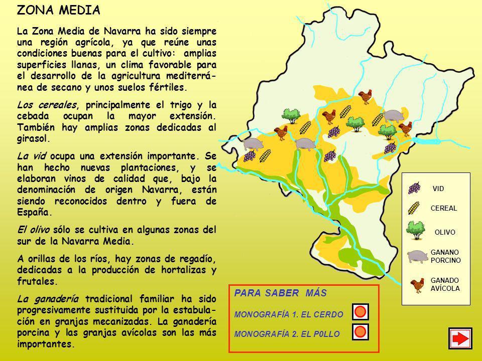 ZONA MEDIA La Zona Media de Navarra ha sido siempre una región agrícola, ya que reúne unas condiciones buenas para el cultivo: amplias superficies llanas, un clima favorable para el desarrollo de la agricultura mediterrá- nea de secano y unos suelos fértiles.