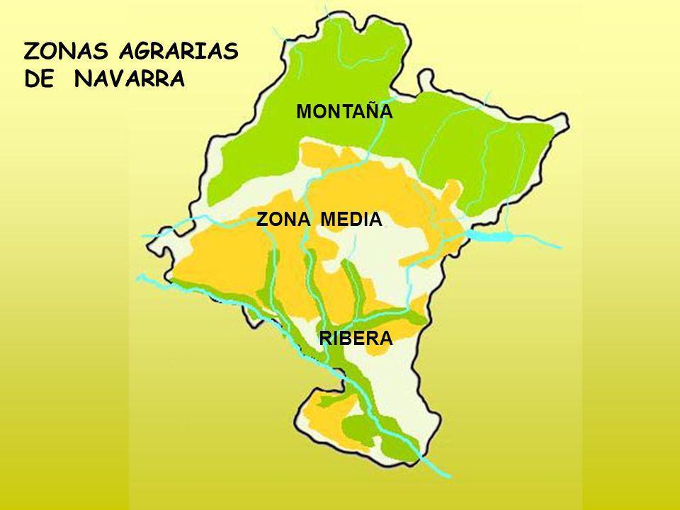 ZONAS AGRARIAS DE NAVARRA MONTAÑA ZONA MEDIA RIBERA Hacer clic en los nombres para acceder a cada zona.