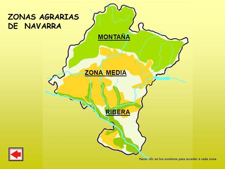 CULTIVO DE TOMATES. Ribera tudelana. PARA SABER MÁS MONOGRAFÍA 6. EL TOMATE