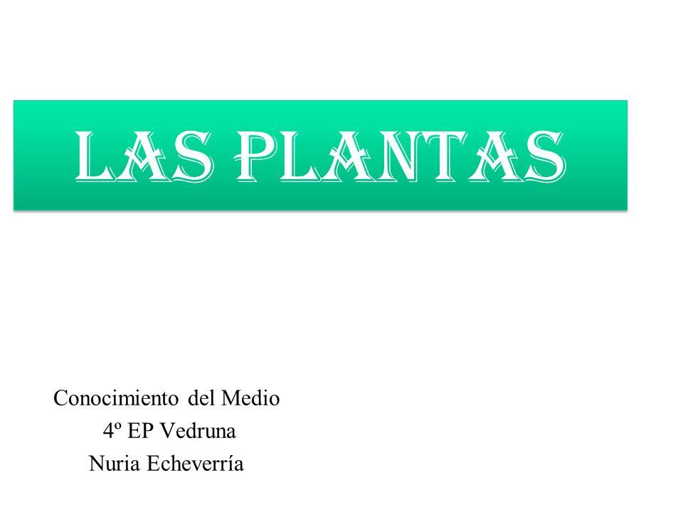 LAS PLANTAS Conocimiento del Medio 4º EP Vedruna Nuria Echeverría