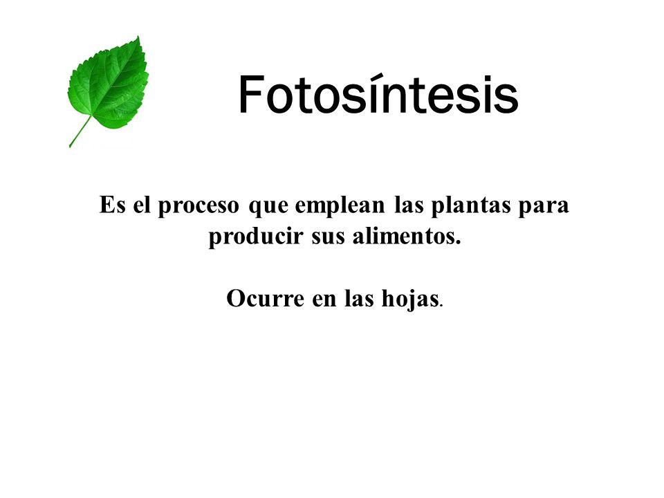 Fotosíntesis Es el proceso que emplean las plantas para producir sus alimentos. Ocurre en las hojas.