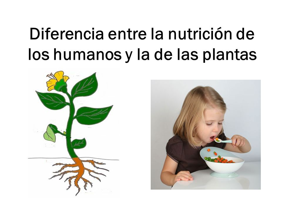Diferencia entre la nutrición de los humanos y la de las plantas