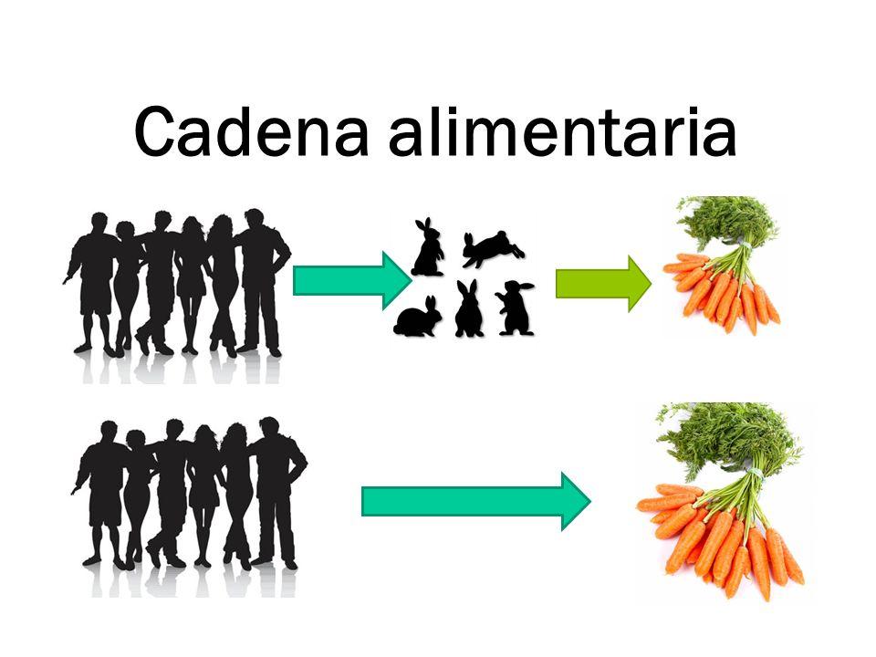 Cadena alimentaria