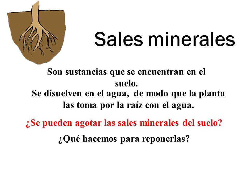 Sales minerales Son sustancias que se encuentran en el suelo. Se disuelven en el agua, de modo que la planta las toma por la raíz con el agua. ¿Se pue